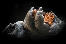 Gorillahände by Ulrich Brodde