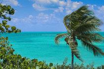A Windblown Palm von John Bailey