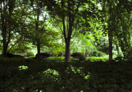 Summer-day-forest-scene