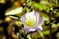 Bloom1c