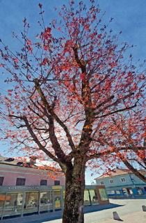 Springtime #4 by Leopold Brix