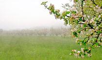 Springtime #3 von Leopold Brix