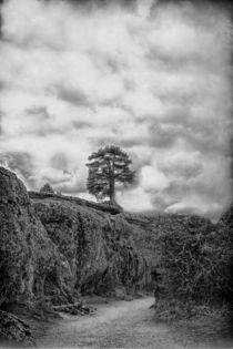 Lonely tree by Joseph Borsi