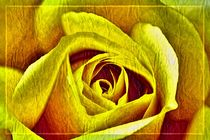 YELLOW ROSE von leddermann