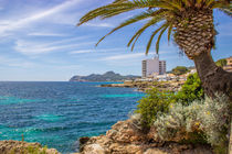 Palmen auf Mallorca by Dennis Stracke