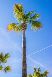 Sommer Sonne Palmen... by Dennis Stracke