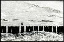 Komischer Vogel by lum-pix-krause