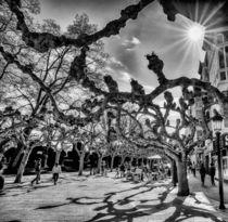 Sunny street in Black and White by Joseph Borsi