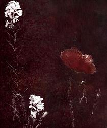 poppy creation by Franziska Rullert
