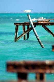 Möven am Riff - Rost und Karibik  von bokehlicate
