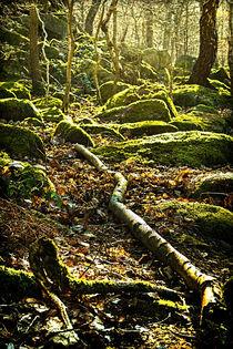 Moss on Rocks von Colin Metcalf
