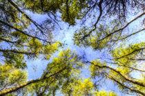 The Tree Canopy by David Pyatt