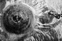 Radiate von Steve Ball