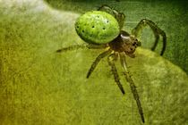 Little Spider von leddermann