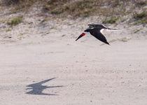 Titusvillebirds20121205-402a