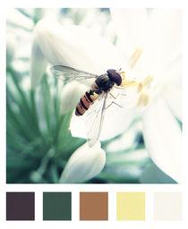 5 Farben Schwebfliege von capfuture