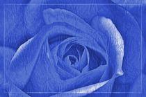 Blaue Rose von leddermann