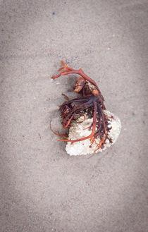 Beachcomber 62 by David Peake