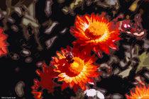 Strohblumen von sarah-strobl