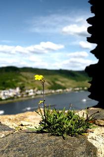 Aussicht von der Ruine Fürstenberg by Joachim P. Pudrel