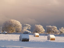 wintry look out! by fionn111