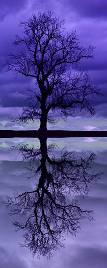 Tree Skeleton Reflection von David Pringle