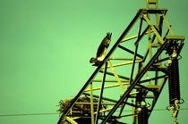 Ein Fischadler in Brandenburg (D) - osprey in brandenburg by mateart