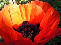 Mohnblüte V von Isabell Tausche