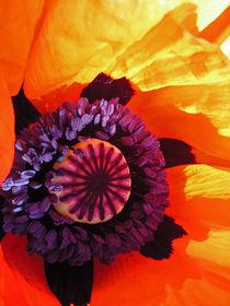 Mohnblüte VI von Isabell Tausche