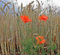 Mohnblumen im Getreide von Florette Hill