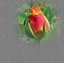 Rosenknospe - bearbeitet by Florette Hill