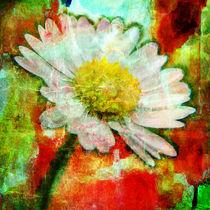 growing daisy by urs-foto-art