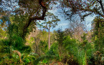 Pristine Area Of Ravine Gardens by John Bailey