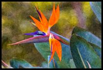 Bird of Paradise with paint efffect by Craig Lapsley