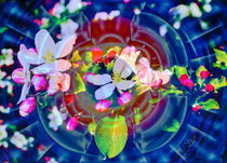 Natur Abstrakt  25 Apfelblüte von Walter Zettl