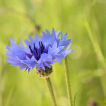 soft blue by sebastiano secondi