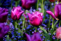 Lieblingsfarben von Renate Dohr
