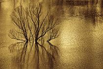 Flooding lake von Giorgio  Perich