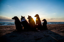 Sun Set Dogs von Magnus Pomm