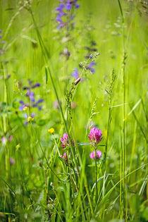 Sommerwiese_01 von Karin Dietzel