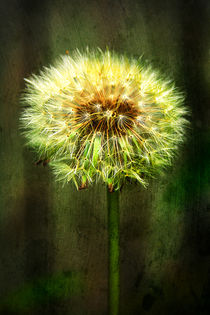 Just a Dandy Lion by Jon Woodhams