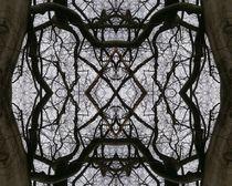 Der Medusenbaum 4 by Tatjana Wicke