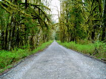 Middle Fork Road by Michael  Wick