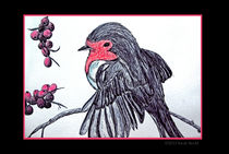 Rotkehlchen by sarah-strobl