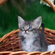 Kleine Katze / 1 von Heidi Bollich