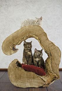 Kittens Trio / 4 von Heidi Bollich