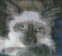 The cat von florin