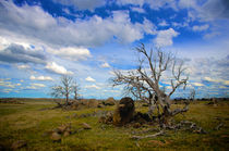 Australian Landscape by Tim Leavy