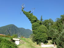 Baum Schlafender Riese /Tree Sleeping Giant von Eckard Maurus