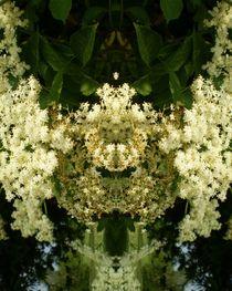 Fliederbeerblütenkranz natur by Tatjana Wicke